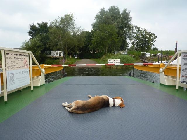 De veerpont-hond van Het Veer Drs. P Nederhemert