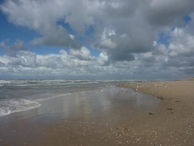 Strand bij Paal 12 Texel