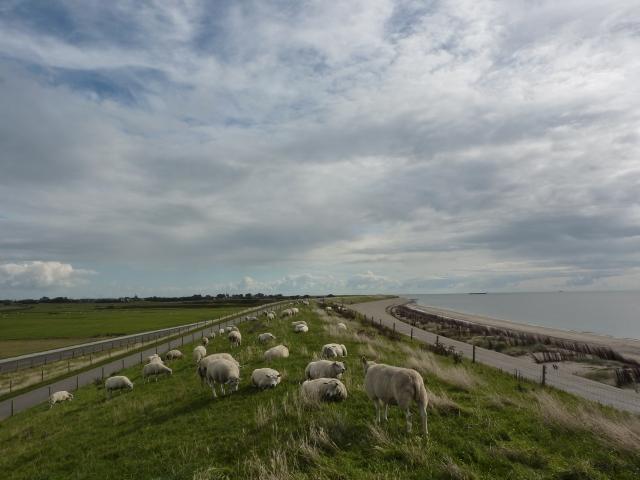 Waddendijk onder Oudeschild Texel