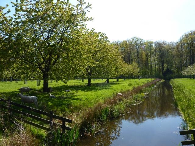 Boomgaard landgoed Oostbroek, De Bilt