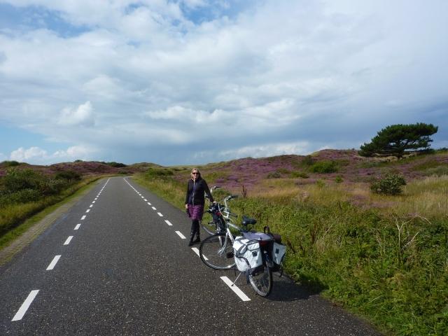 Heide in bloei, Texel