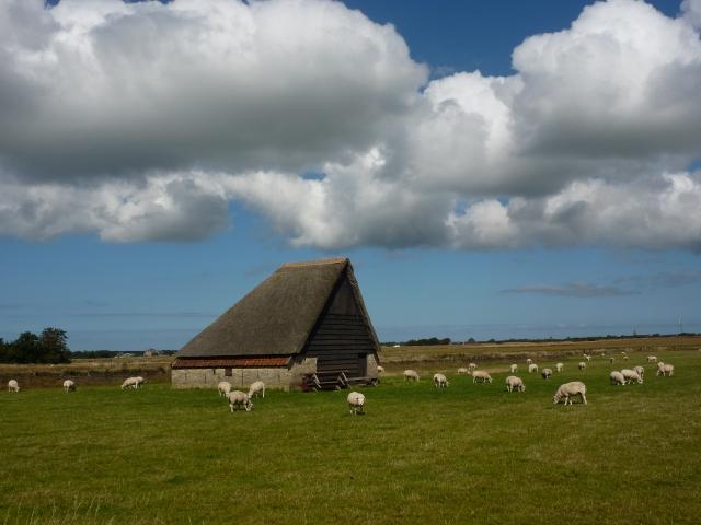 Schapenboet, de Hoge Berg, Texel